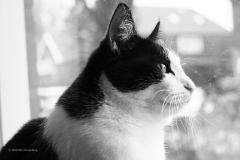 kat#(20200402)