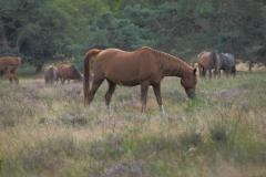 paard#(20210815)a