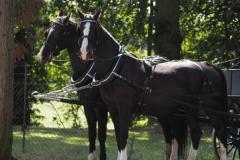 paard#(20200905)a