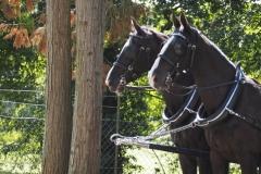 paard#(20200905)aa
