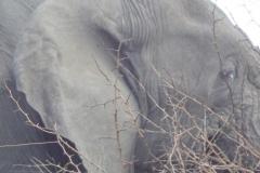 olifant#(20141106)c