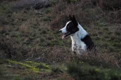 hond#(20201114)