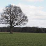 serie bomen